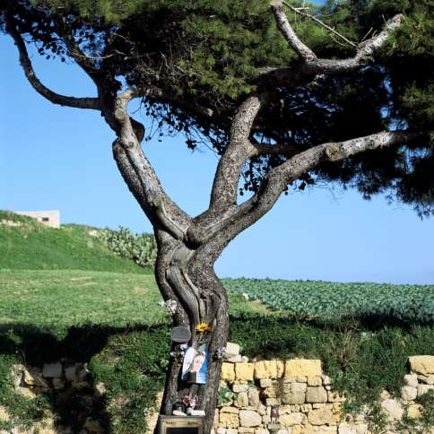 Guideposts: Years ago, this ordinary tree in Malta was supposedly struck by lightning. It now bears the not-so-ordinary image of Jesus on the cross.