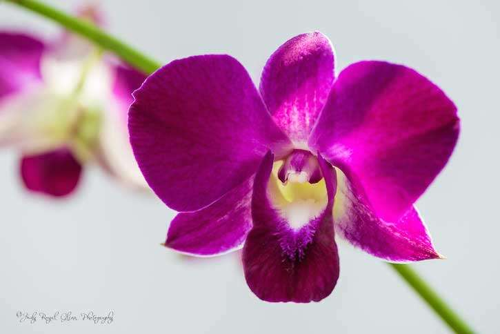 Guideposts: A beautiful pink orchid captured by photographer Judy Royal Glenn