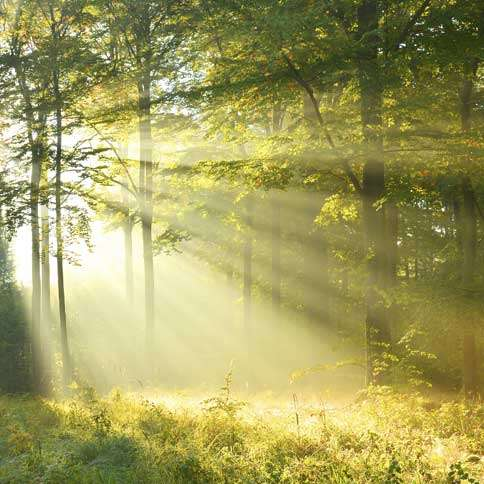 Guideposts: Beams of sunlight peek through the trees in a spring forest.