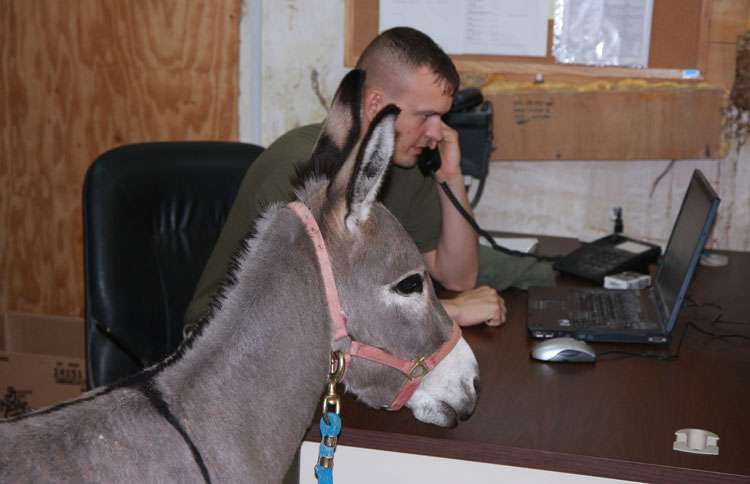 Smoke hangs out in the office with Sgt. Lonnie Forrest