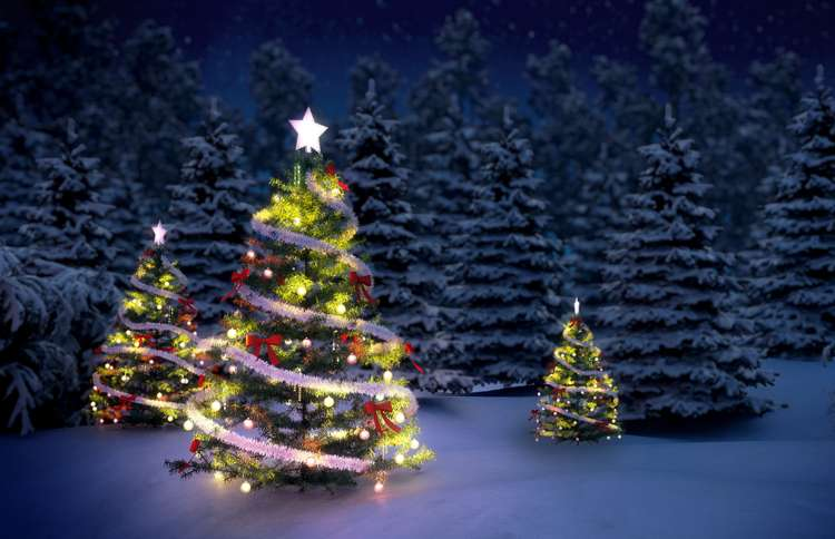 Guideposts: Several Christmas trees, strung with glowing lights, shine in a snow-covered field