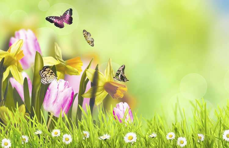 Guideposts: Butterflies gather around brightly colored spring flowers in a sun-drenched field.