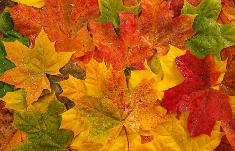 Guideposts: A closeup shot of fallen autumn leaves in a wide range of hues