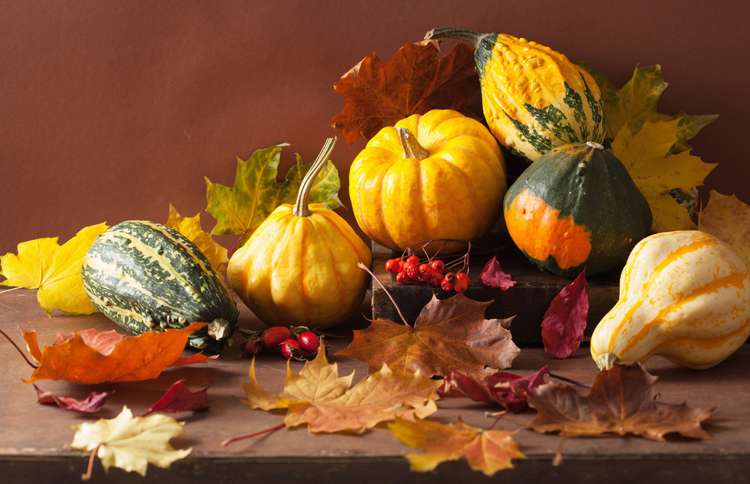 Guideposts: A collection of colorful small gourds are artfully arrange to evoke an autumnal  mood.