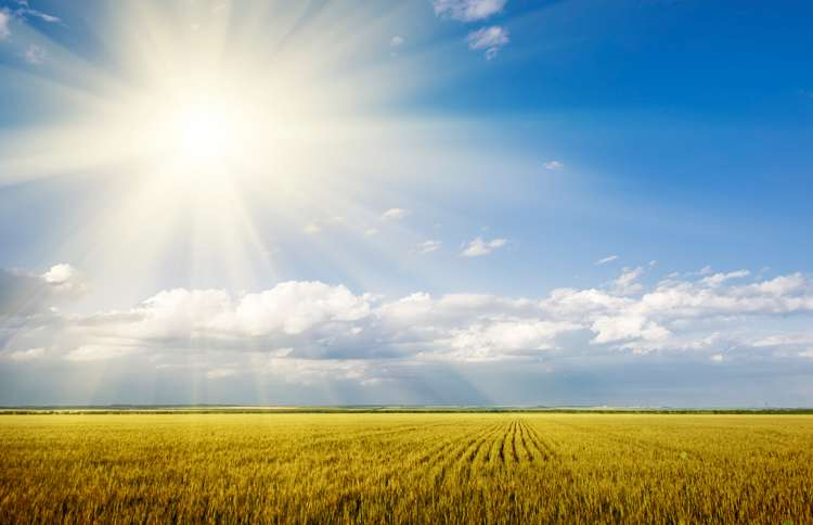 Guideposts: The sun shines brightly over a golden field of wheat.