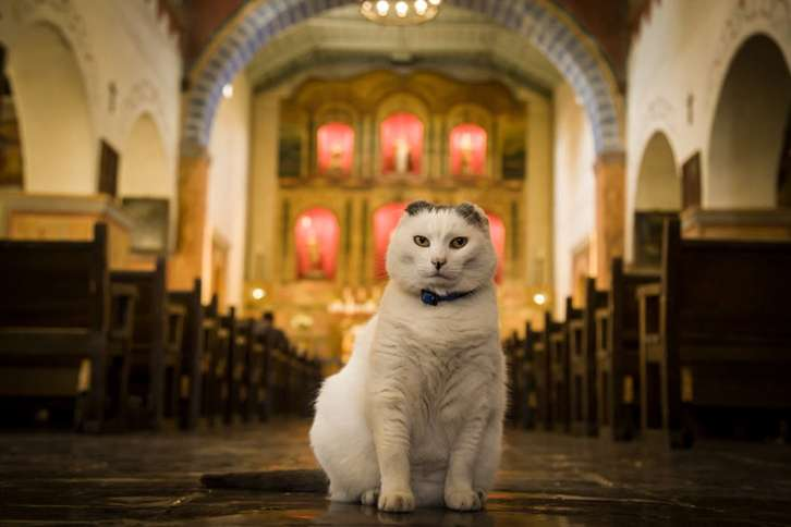Guideposts: Sula the cat poses at her home, California's Old Mission San Juan Bautista