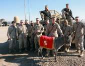 Iraq Veteran Refuses to Leave Therapy Donkey Behind