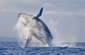 The divine beauty of whales.