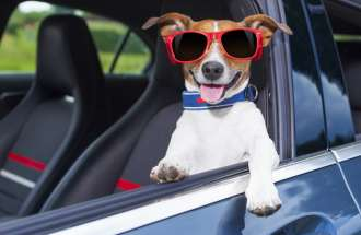 A dog wearing shades hangs out of a car's driver's side window