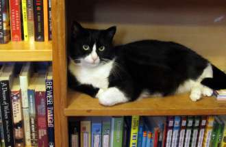 Bookstore Cat sits on a library shelf in the new book Cats on the Job
