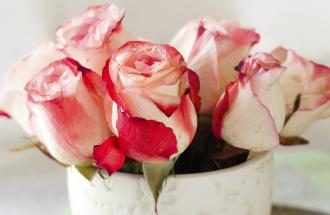 Five roses in a porcelain cup