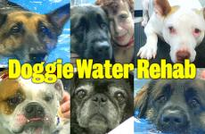Pet Stories: Doggie water rehab