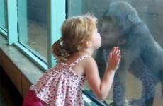 A little girl and a baby gorilla smooch through a pane of glass.