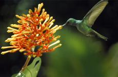 A hummingbird hovers near a colorful flower.