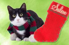 A cute cat next to a Christmas stocking