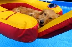 A golden retriever lounges on an inflatable raft in a pool.
